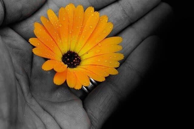 fleur jaune dans une main 1