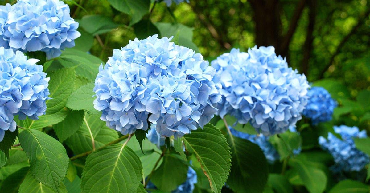 fleurs faciles à entretenir pour votre jardin à la maison