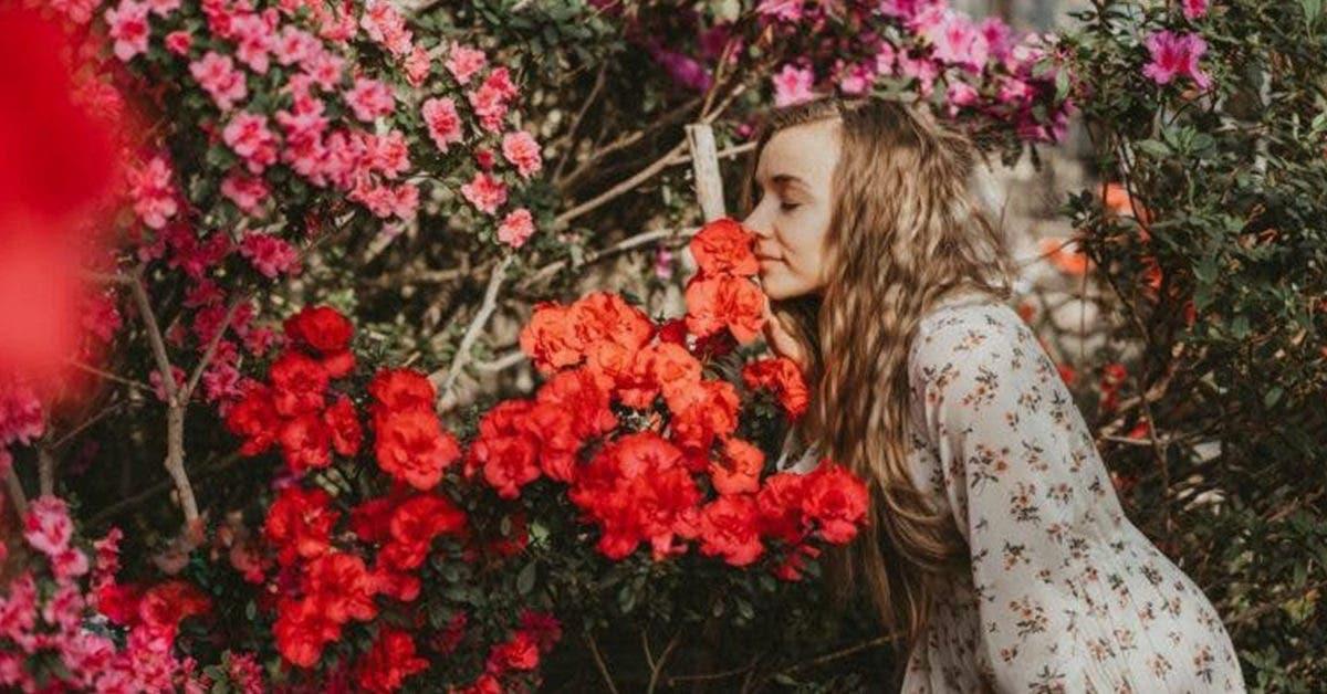 5 Plantes qui feront régner le bonheur chez vous