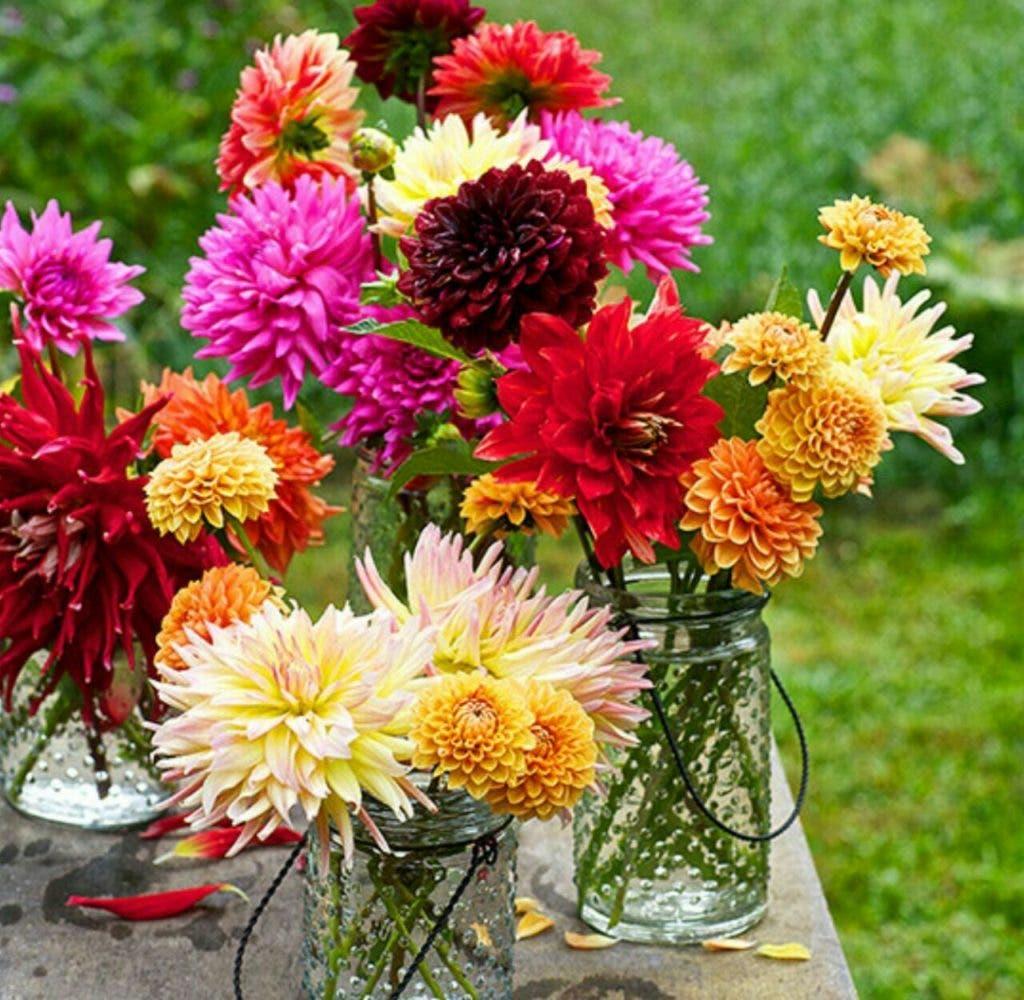 fleurs 3 1024x1000 1