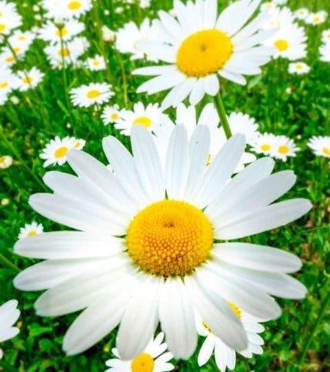Votre fleur de naissance révèle votre véritable personnalité