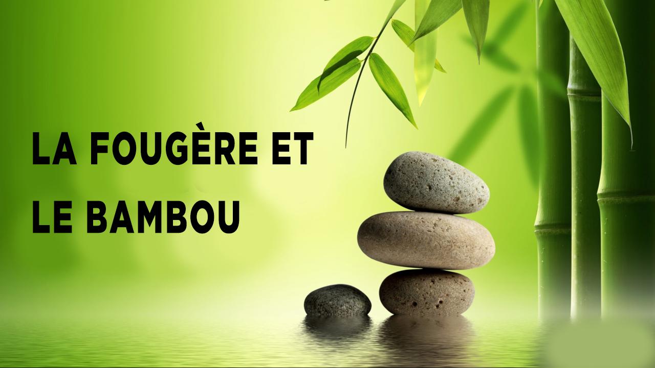fougere et bambou