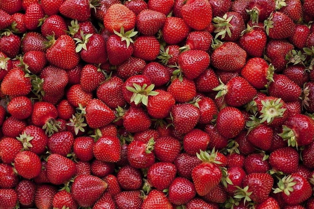 fraises 4