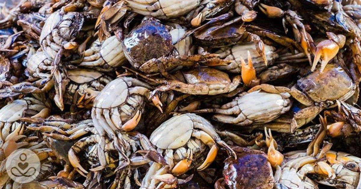 Des experts avertissent que les bactéries mangeuses de chair pourraient se propager dans les eaux et les fruits de mer