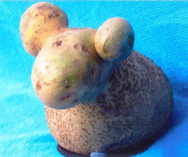fruits-et-legumes-tellement-bizarres-18