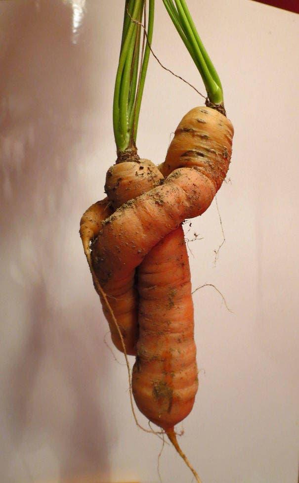 fruits-et-legumes-tellement-bizarres-20