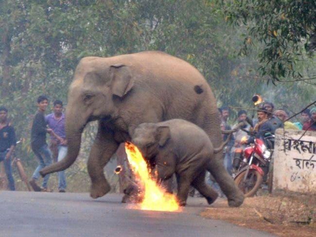 fuite elephants