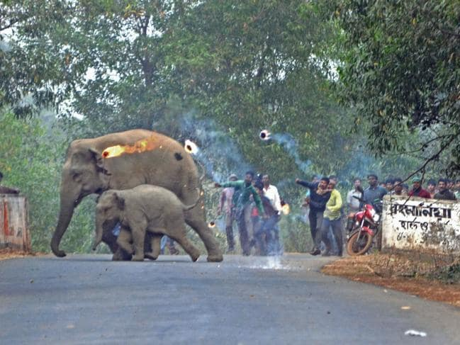 fuite elephants1