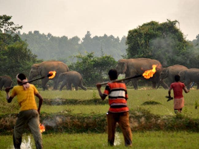 fuite elephants2