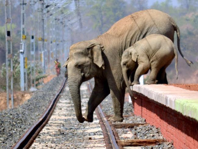 fuite elephants3