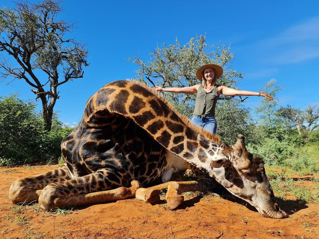 giraffemorte