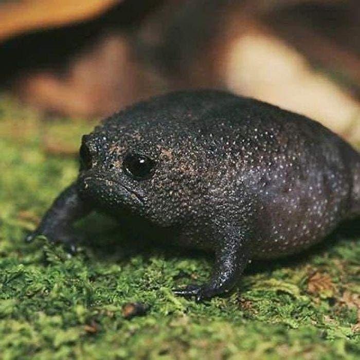 grenouille en colere1