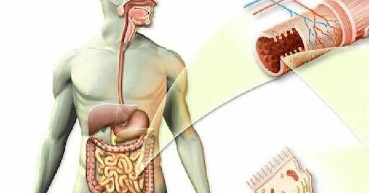 how to clean your intestines from mucus toxins and fecal deposits in three weeks 1 1
