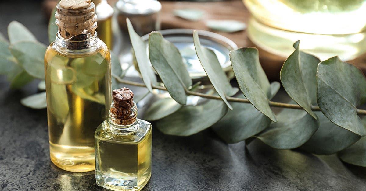 huile essentielle eucalyptus 1