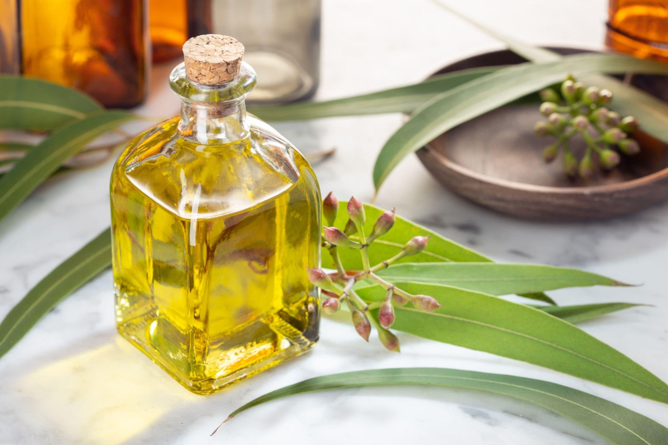 huile eucalyptus