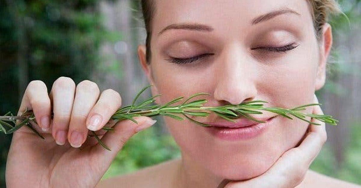 inhaler cette plante stimule la memoire de 75 1