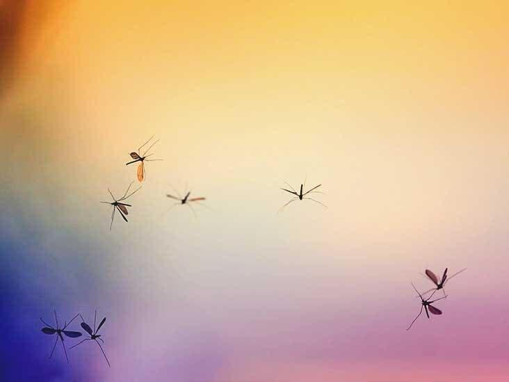 Invasion de moustiques