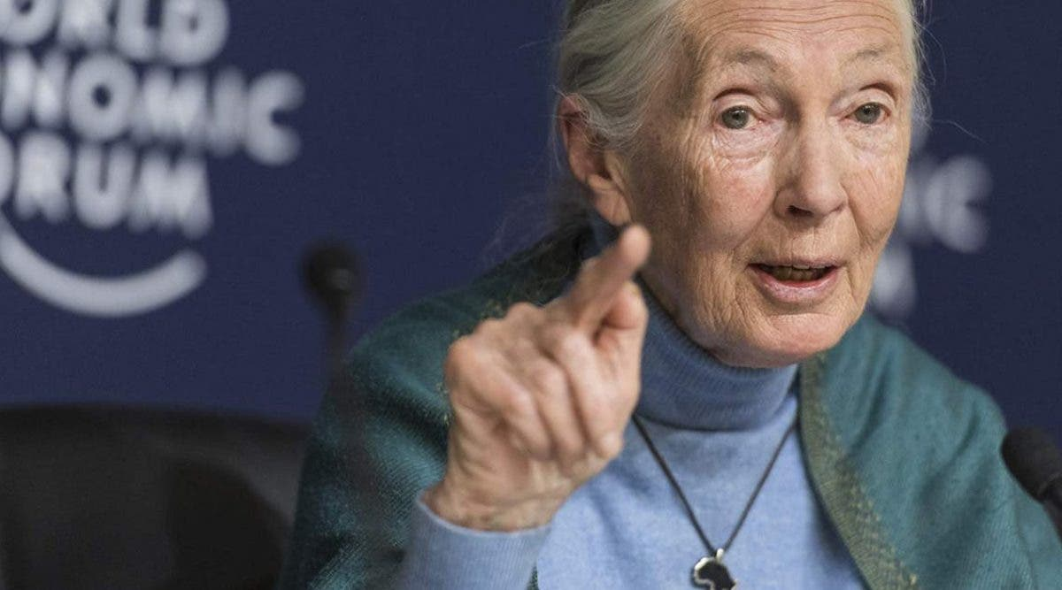 jane-goodall-lhumanite-est-finie-si-elle-ne-parvient-pas-a-sadapter-apres-le-covid-19