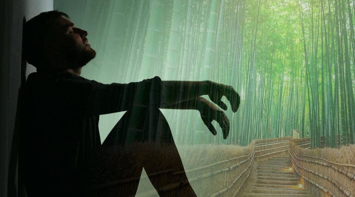 la-fable-de-la-fougere-et-du-bambou-que-vous-devriez-lire-lorsque-vous-traversez-une-epreuve-difficile