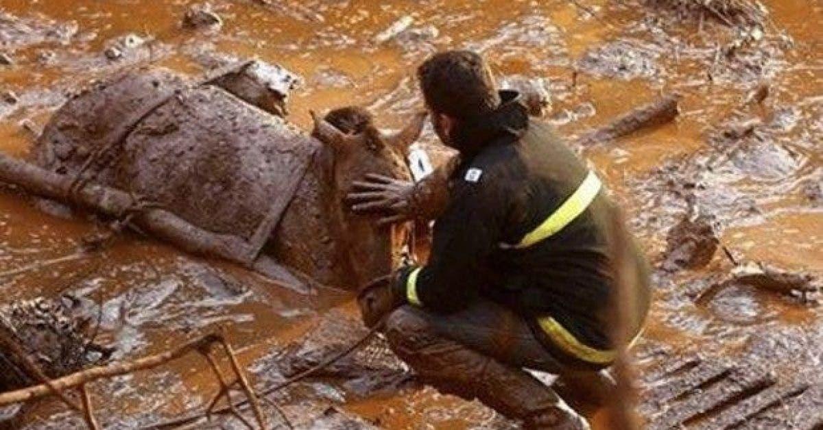 la pire catastrophe humanitaire et environnementale de lhistoire du bresil passee sous silence pendant la cop 21 1