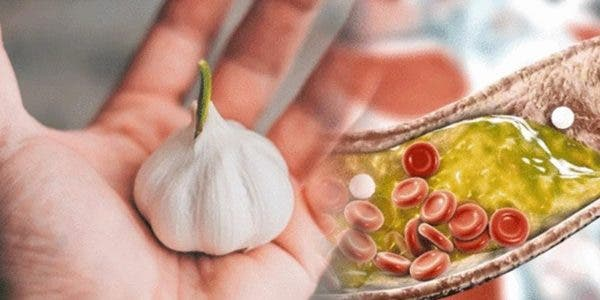 lail-reduit-il-le-cholesterol-voici-ce-que-disent-les-etudes