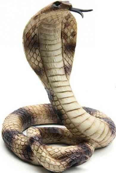 animal que vous distinguez en premier en dit long sur votre profonde personnalité