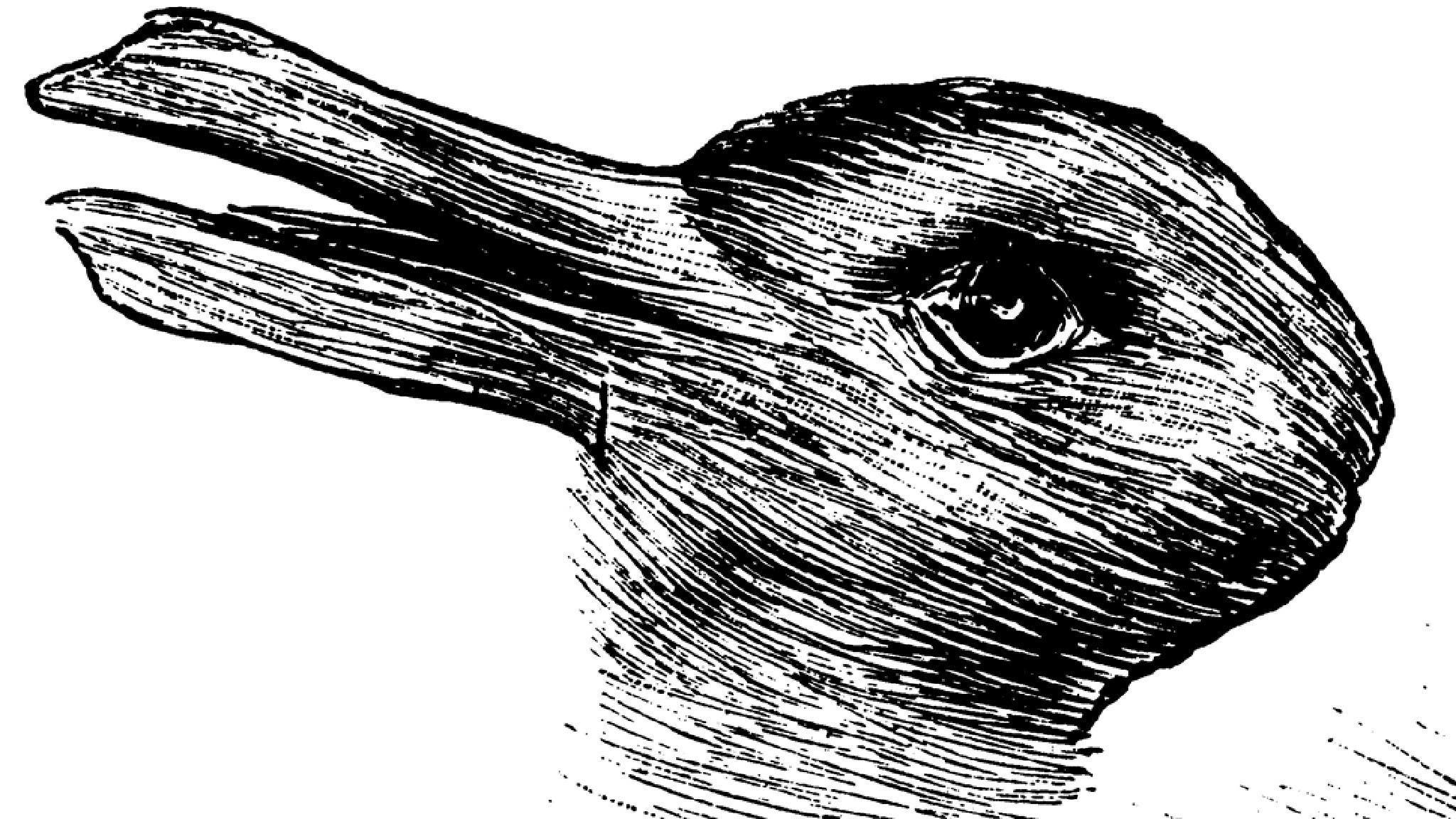 lapin canard