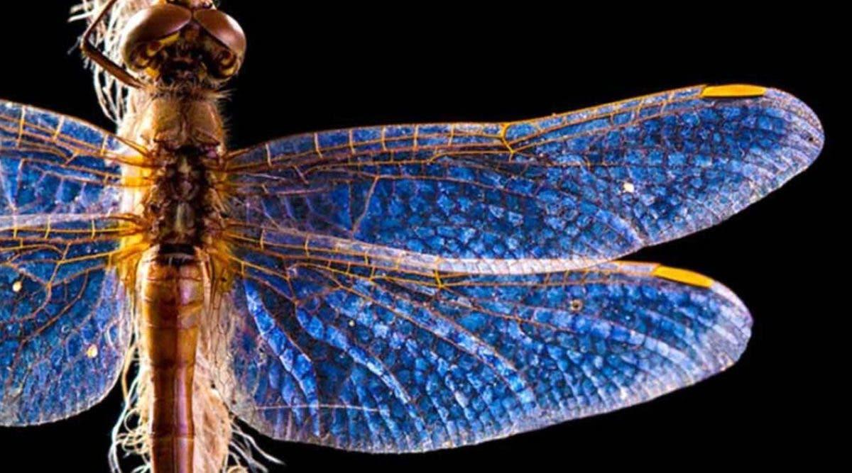 lapparition-de-libellules-peut-avoir-une-signification-profonde-en-voyez-vous-souvent