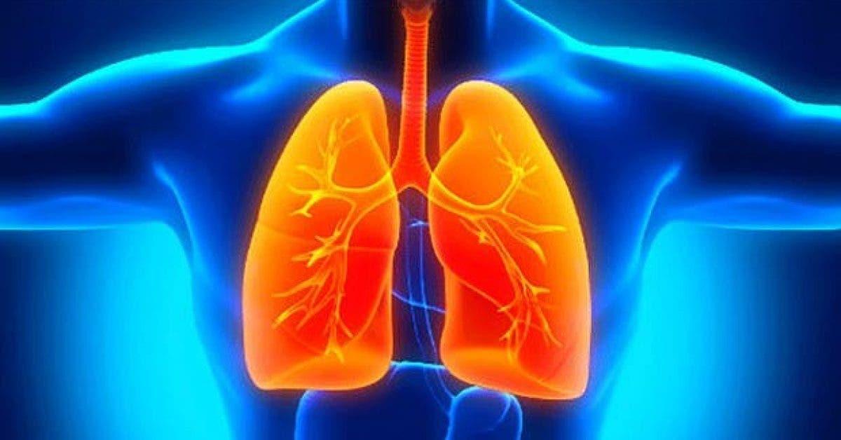 le compose qui repare les dommages aux poumons provoques par une broncho pneumopathie chronique obstructive 1