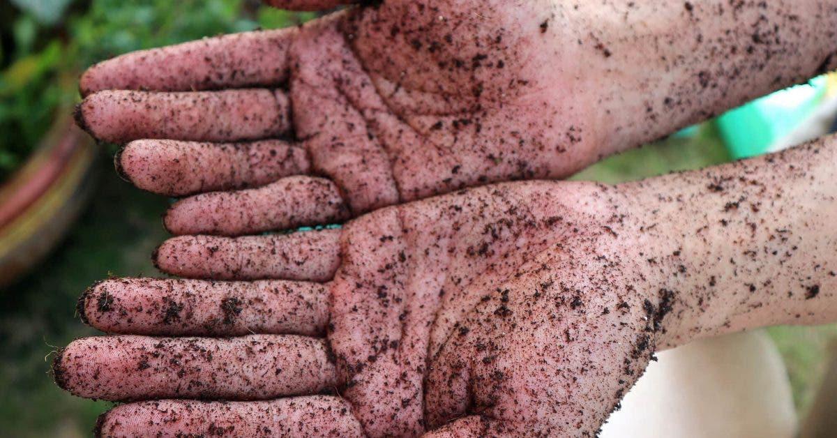 le-jardinage-est-un-antidepresseur-naturel-des-chercheurs-ont-decouvert-que-les-microbes-presents-dans-le-sol-pouvaient-rendre-heureux