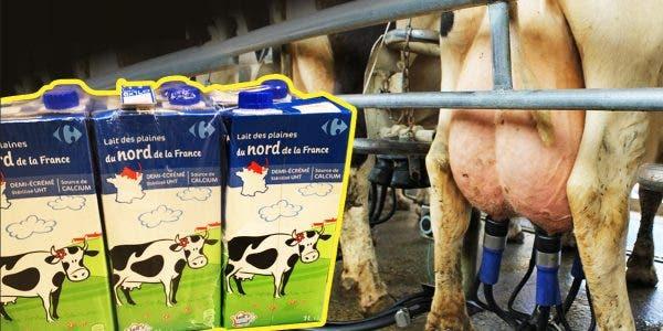 le-lait-de-vache-est-il-mauvais-pour-la-sante