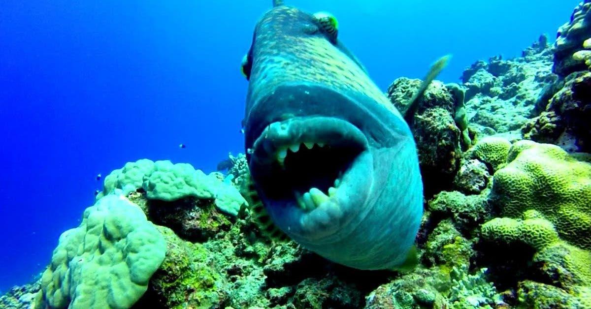 le-mysterieux-poisson-mordeur-en-mediterranee-un-couple-filme-le-coupable
