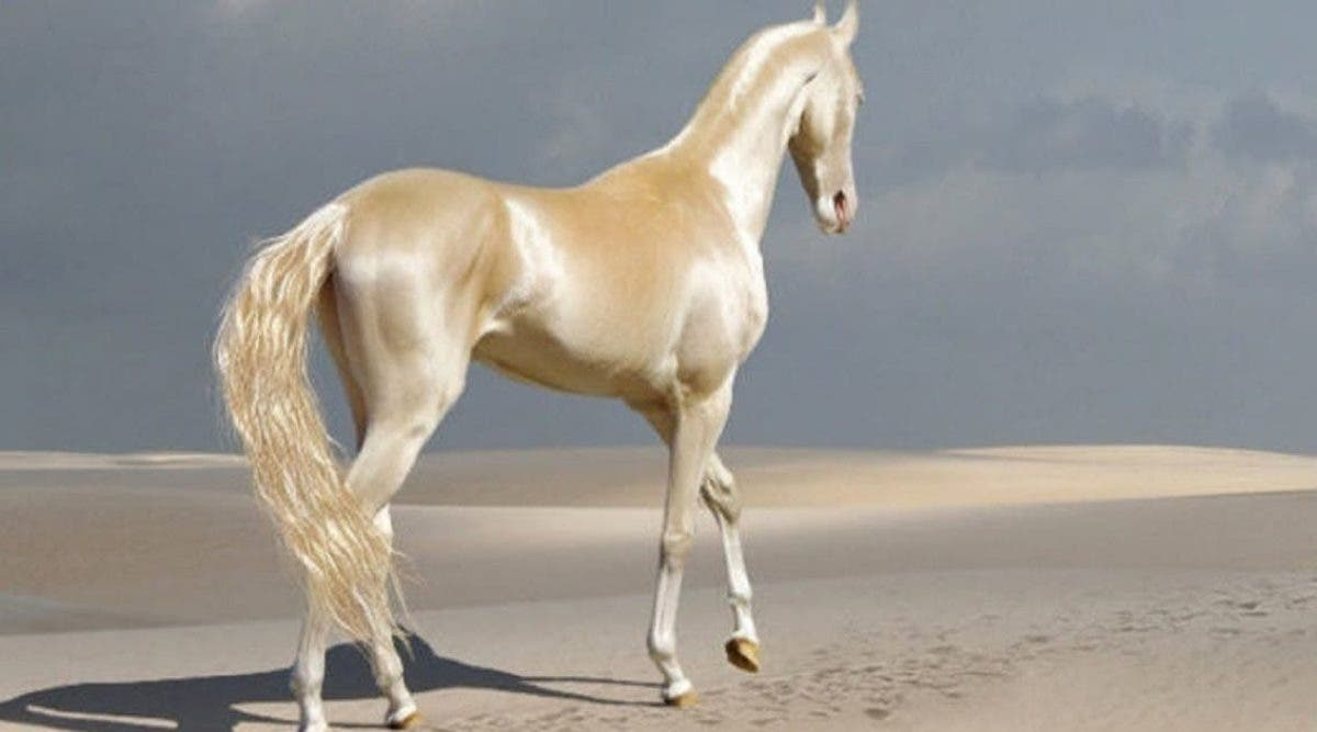 le-plus-beau-cheval-au-monde-a-lair-detre-couvert-dor-et-il-est-magnifique