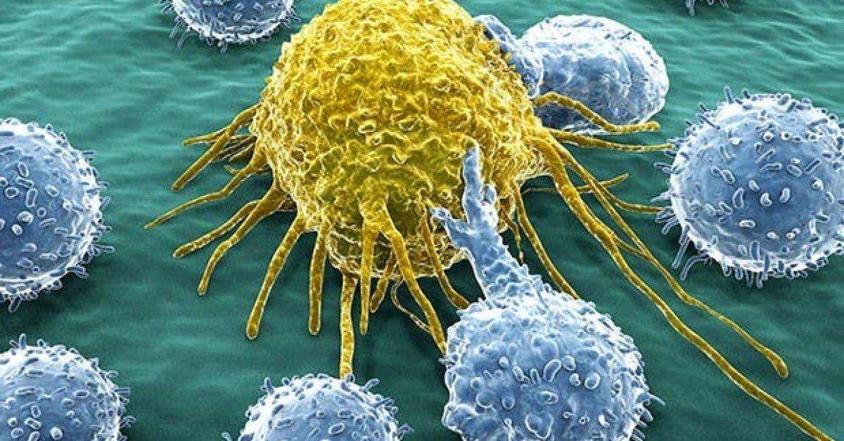 les 10 meilleurs aliments qui previennent le cancer du sein 1