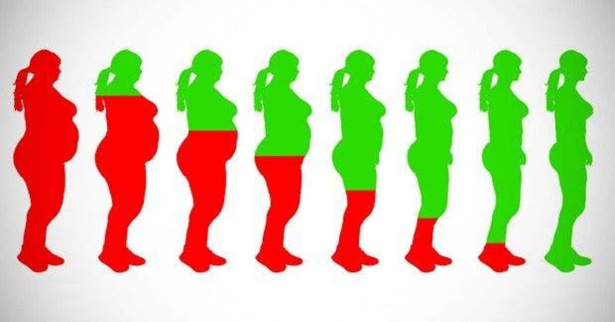 les 20 meilleurs aliments pour perdre du poids rapidement 1