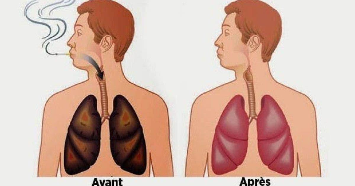 les aliments nettoient vos poumons de la nicotine et des goudrons 1
