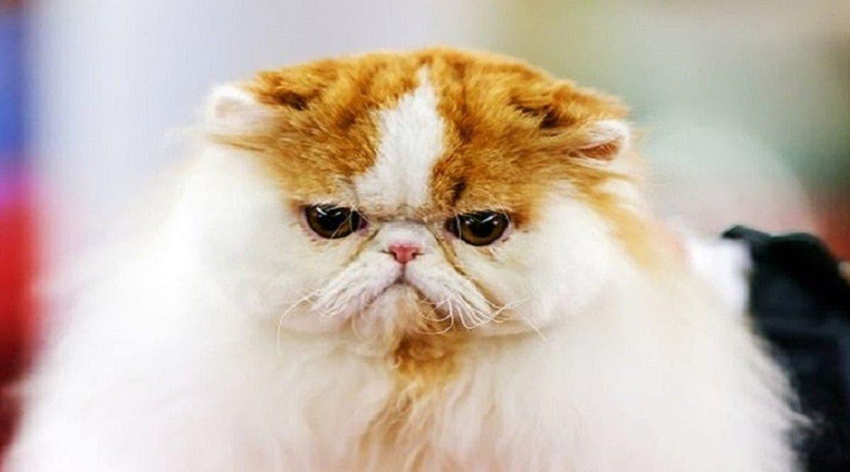 C'est prouvé : les chats développent les mêmes traits de personnalité que leurs propriétaires