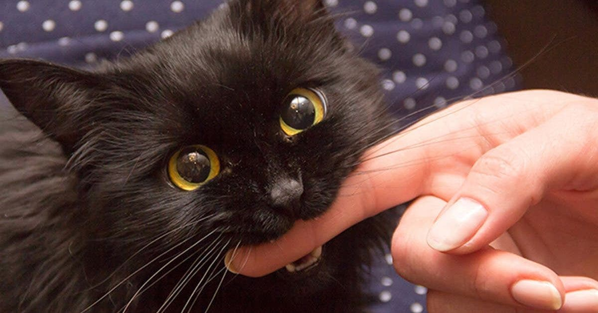 les-chats-sont-le-meilleur-ami-de-lhomme-voici-comment-decoder-ce-quils-veulent-vous-dire