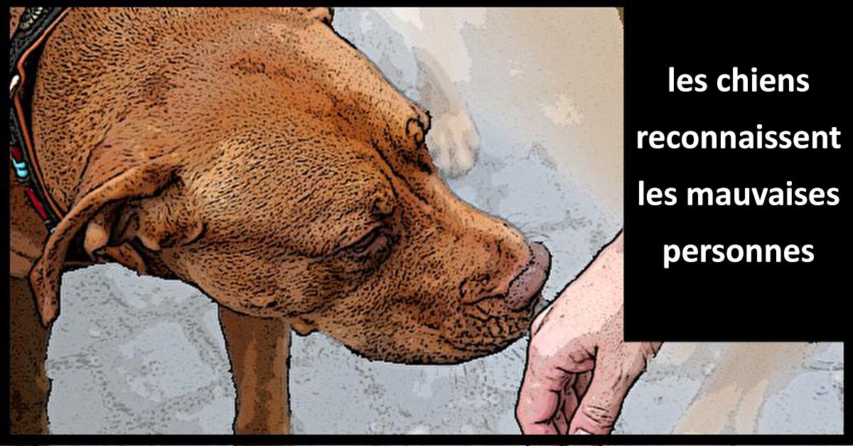 les chiens reconnaissent les mauvaises personnes