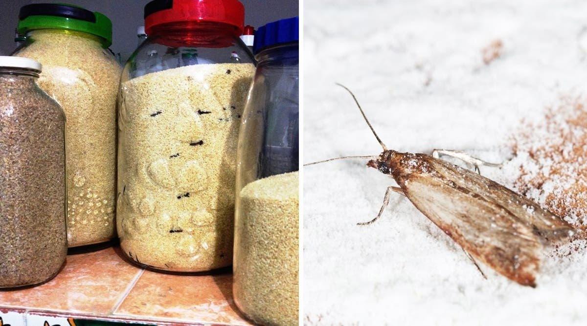 les-clous-de-girofle-eloignent-les-mites-alimentaires-de-vos-placards-voici-comment-les-utiliser