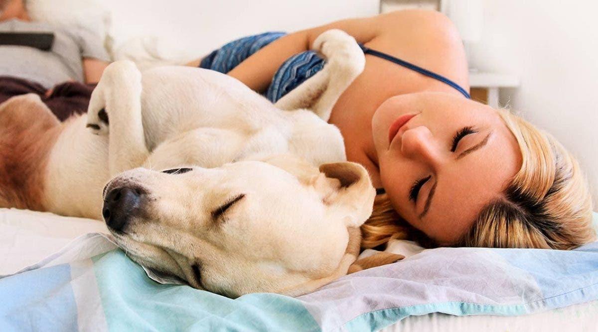 les femmes dorment mieux avec un chien qu'avec un homme dans leur lit