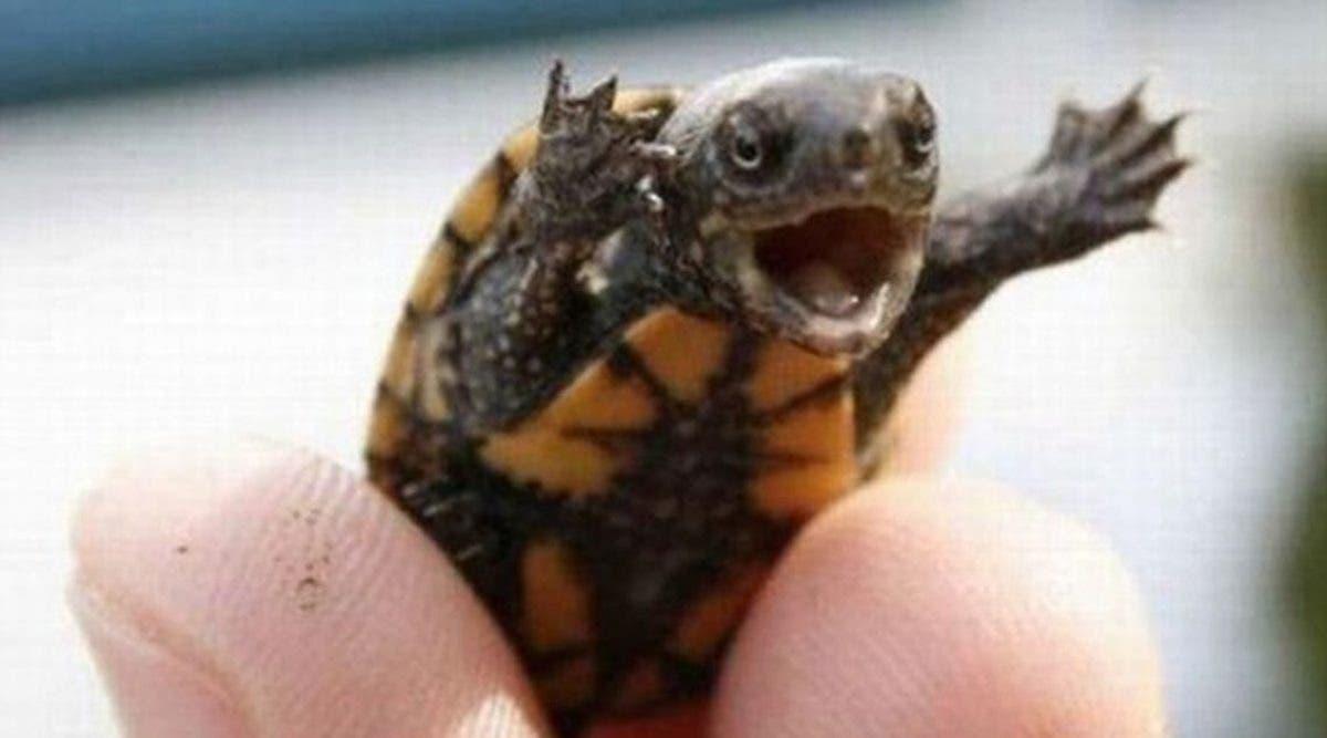 les-medecins-trouvent-une-tortue-dans-le-vagin-dune-femme