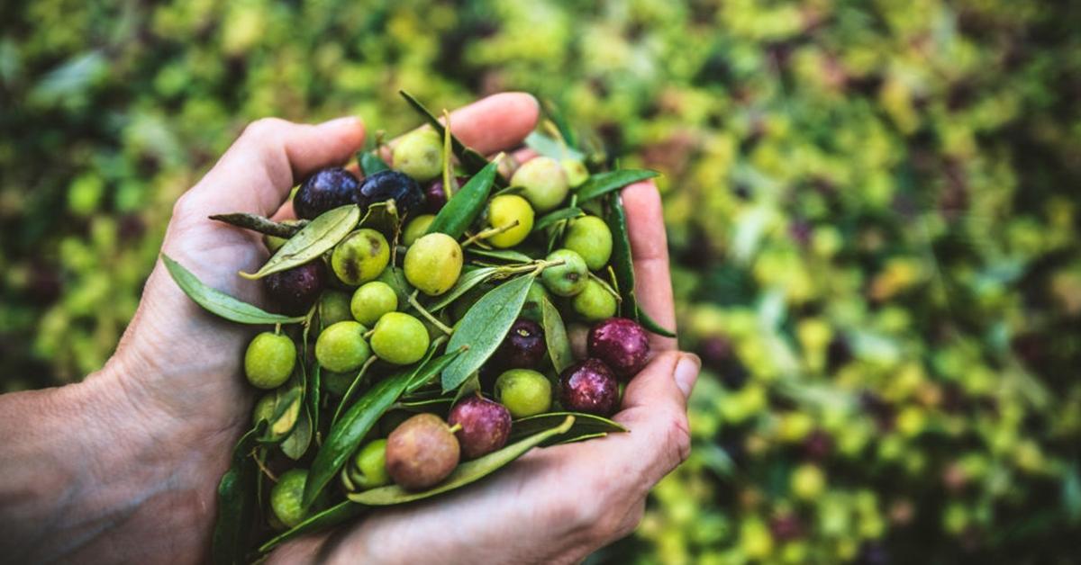 les recettes curatives base pommes 5 raisons de manger plus dolives 1