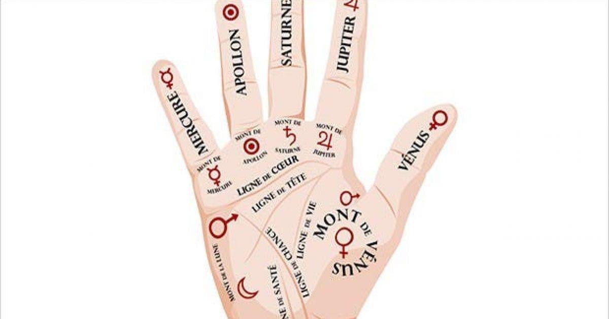 les secrets caches des lignes de votre main 1