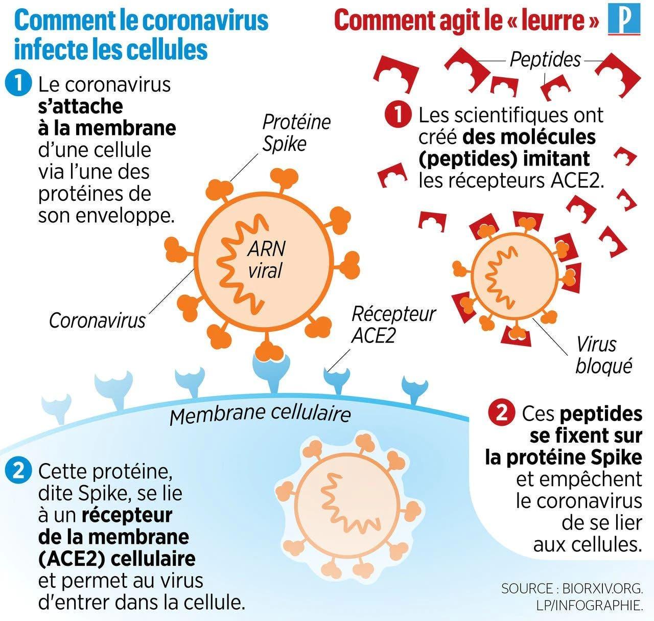 leurre coronavirus