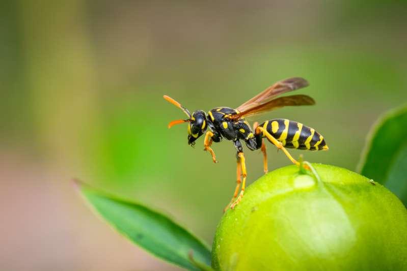 Voici l'insecte spirituel de chaque signe du zodiaque et ce qu'il dit de votre personnalité