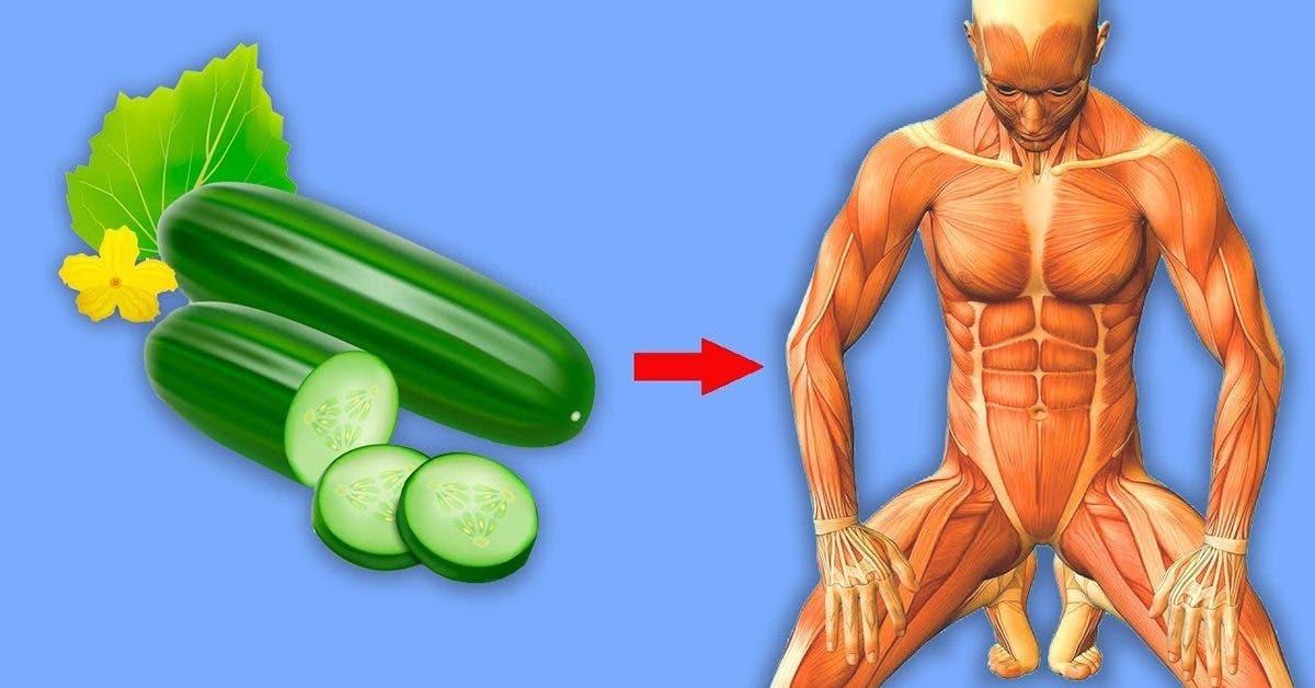 manger-du-concombre--les-effets-sur-la-sante