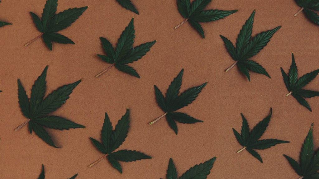 marijuana 1024x575 1
