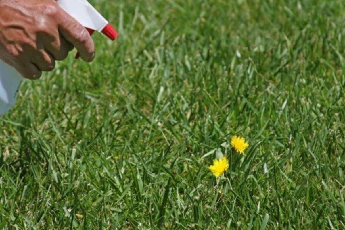 mauvaise herbe