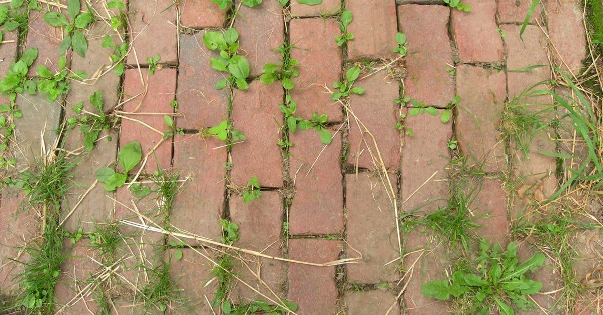 9 astuces ultra-efficaces pour les mauvaises herbes